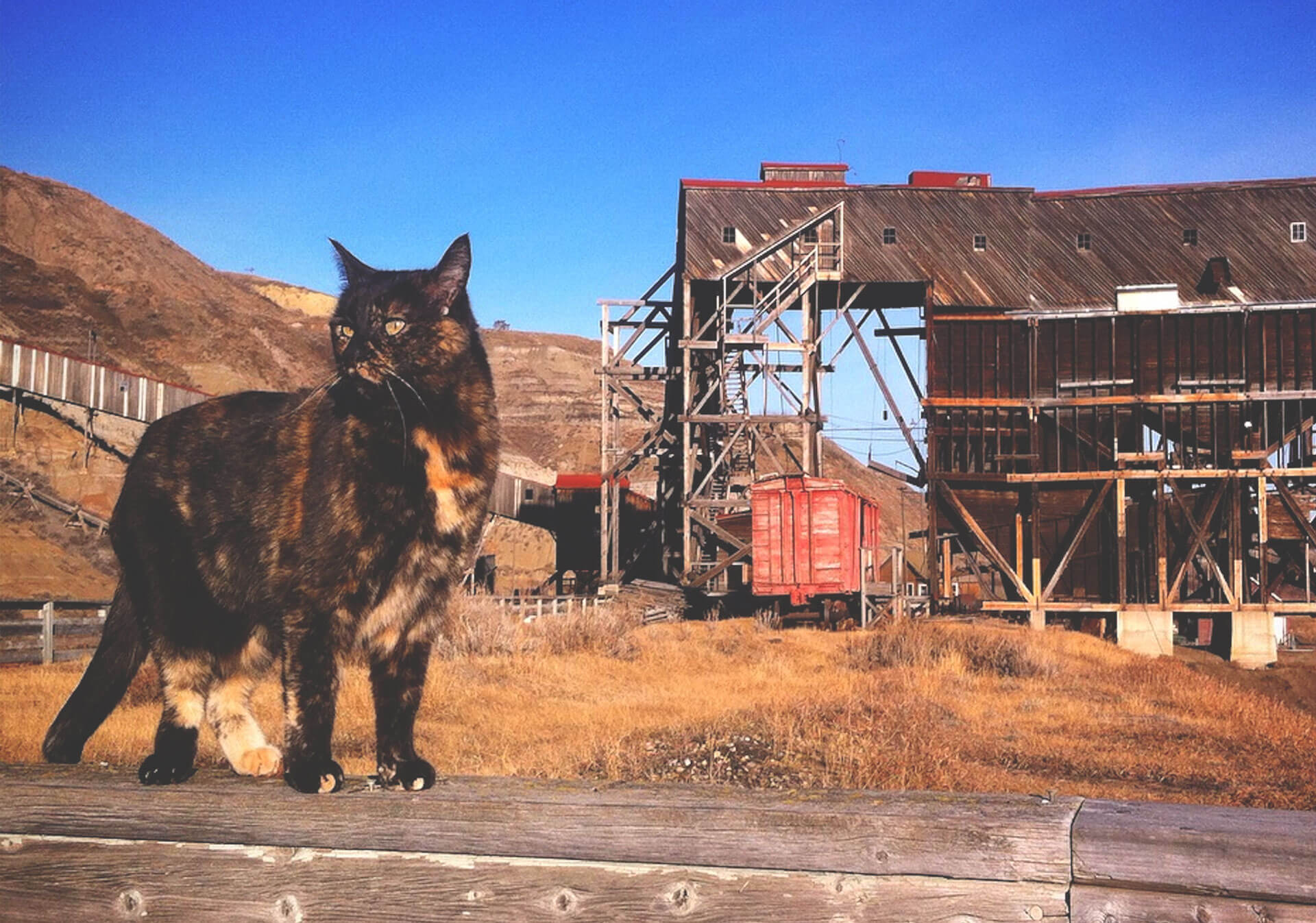 Atlas Coal Mine National Historic Site and a cat