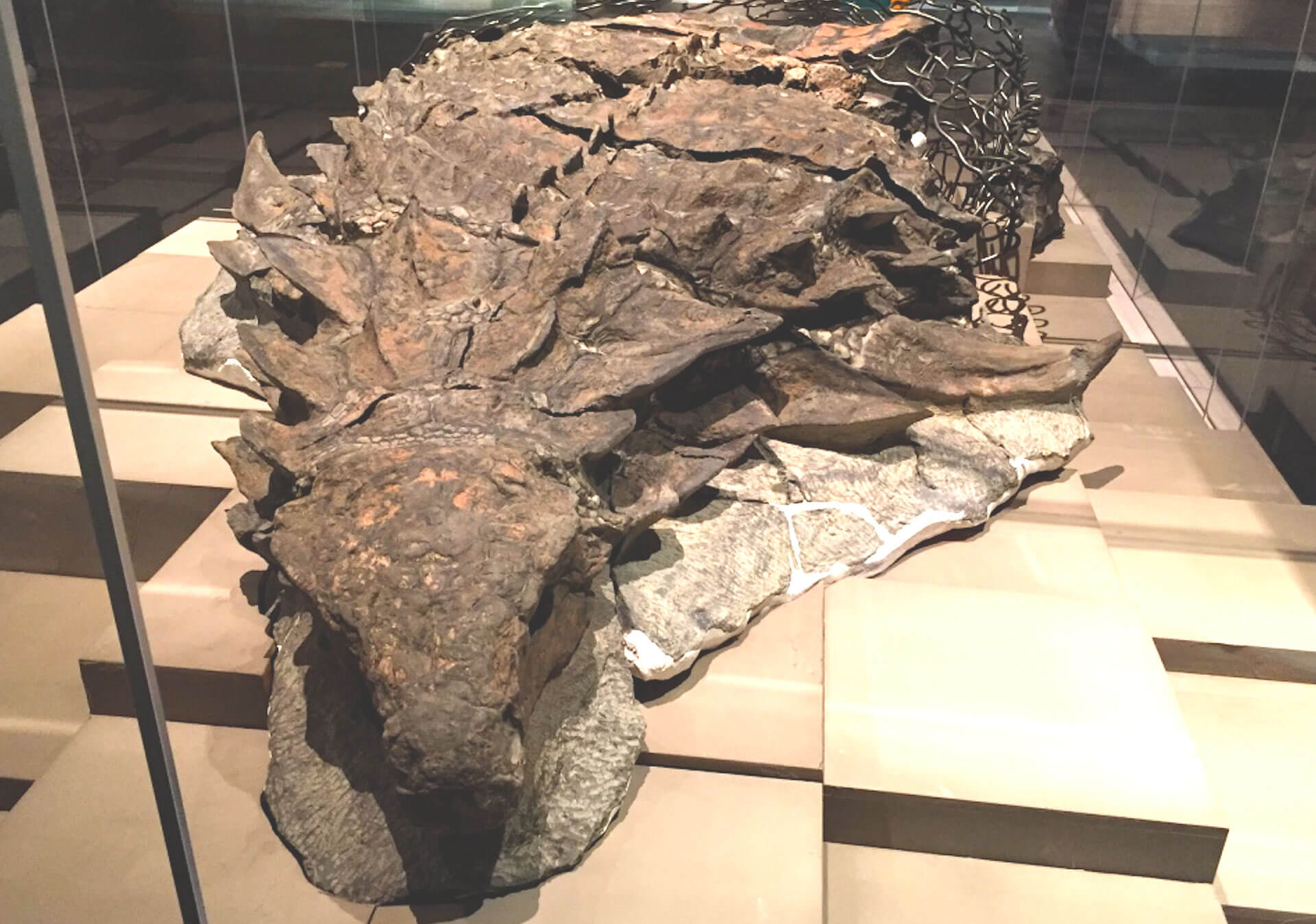Royal Tyrell Museum Fossil