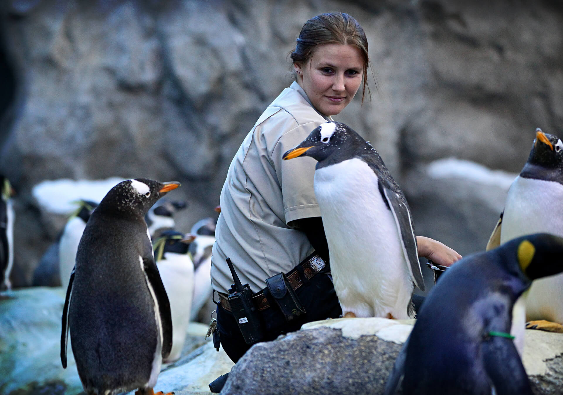 Calgary Zookeeper with penguins