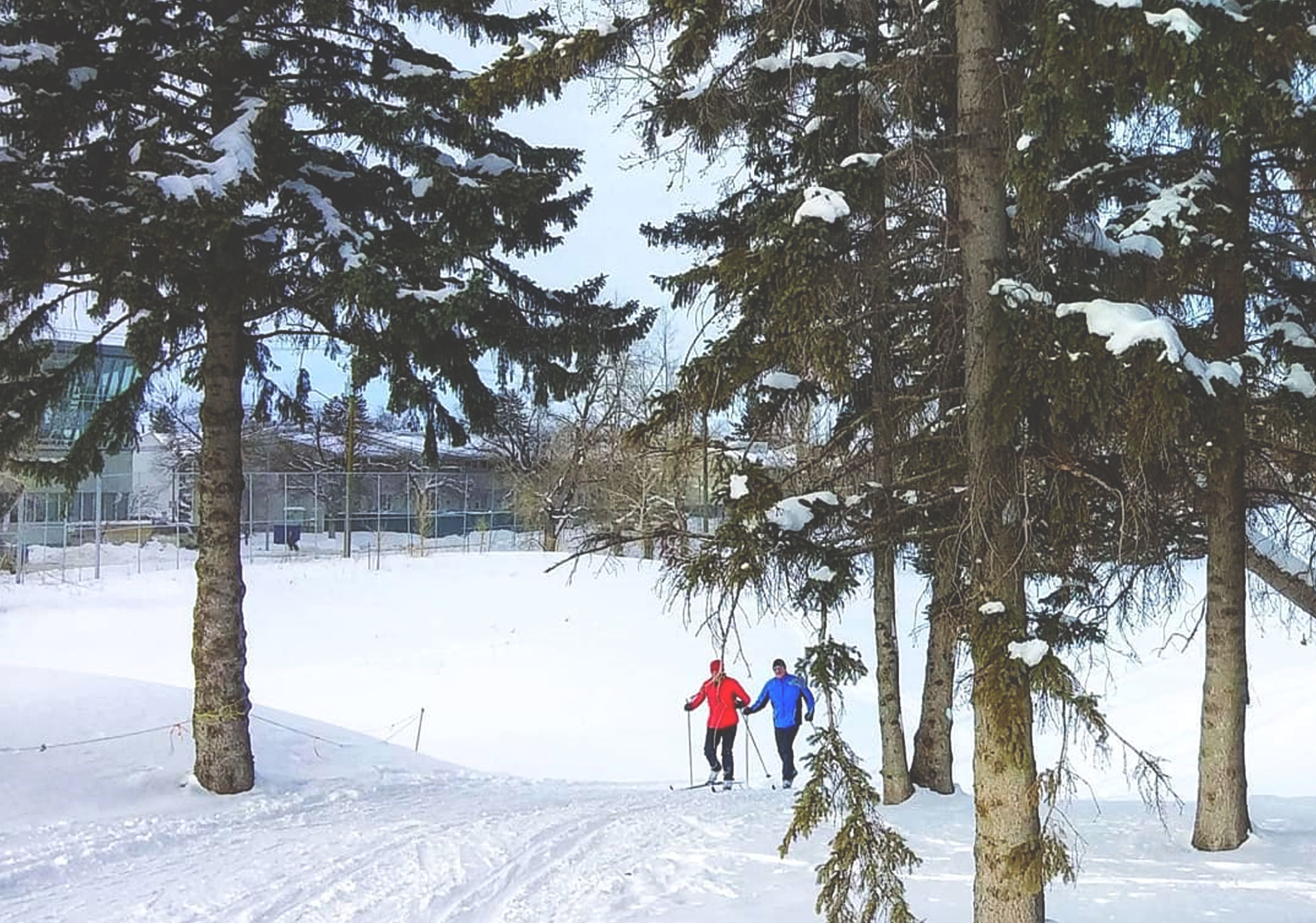 Cross-country skiing at Shaganappi Point Golf Course in Calgary