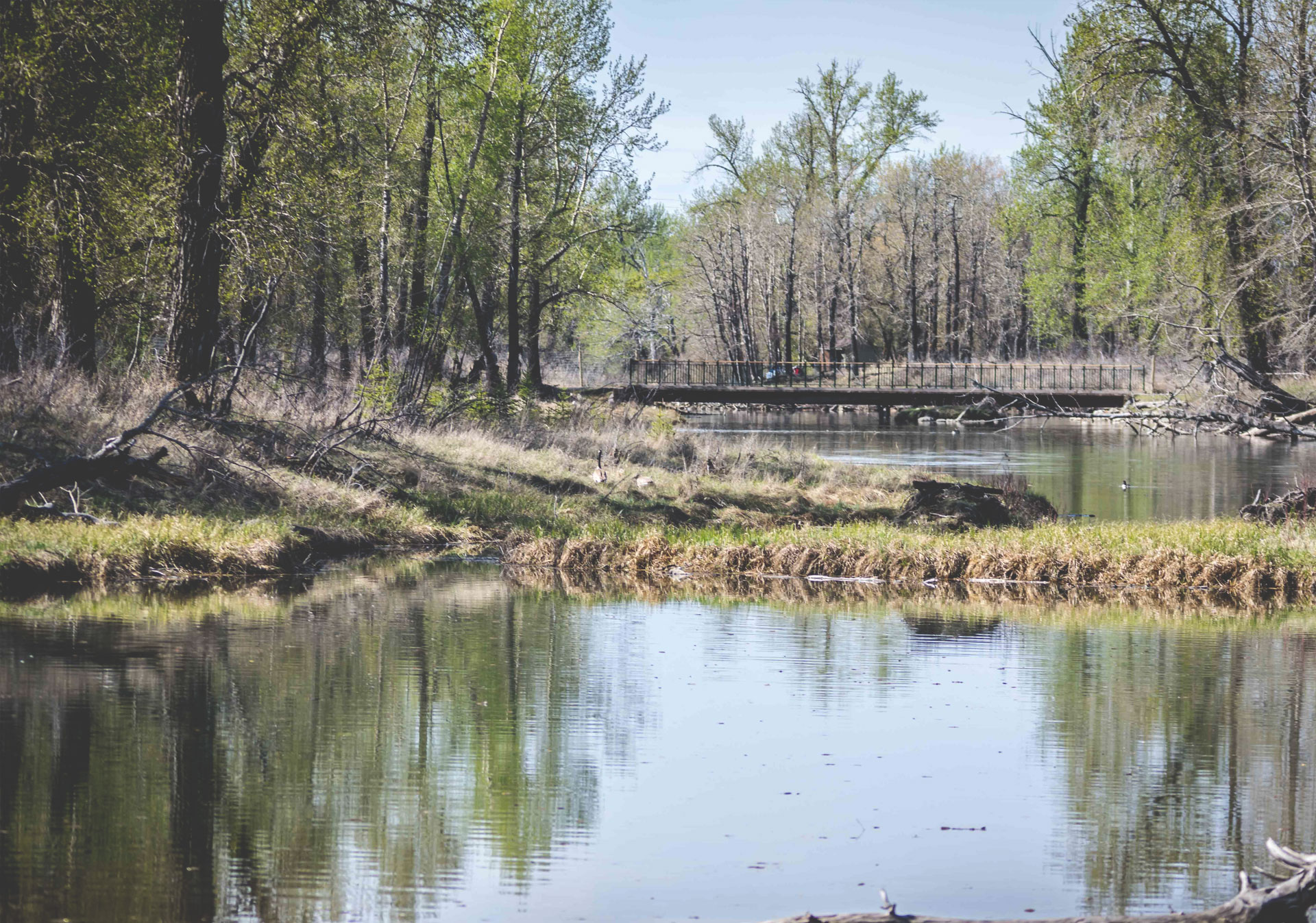 Take a hike through the Inglewood Bird Sanctuary at any point during the year