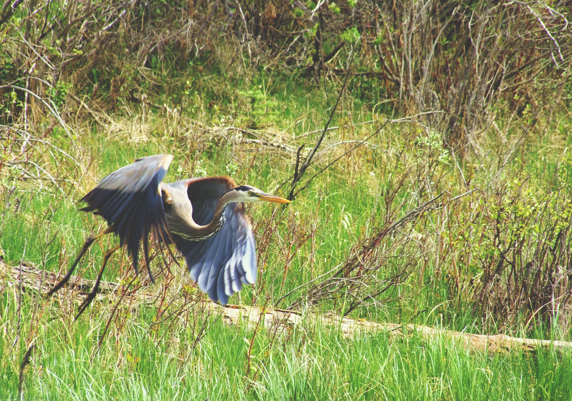 Take a nature walk in the Inglewood Bird Sanctuary.