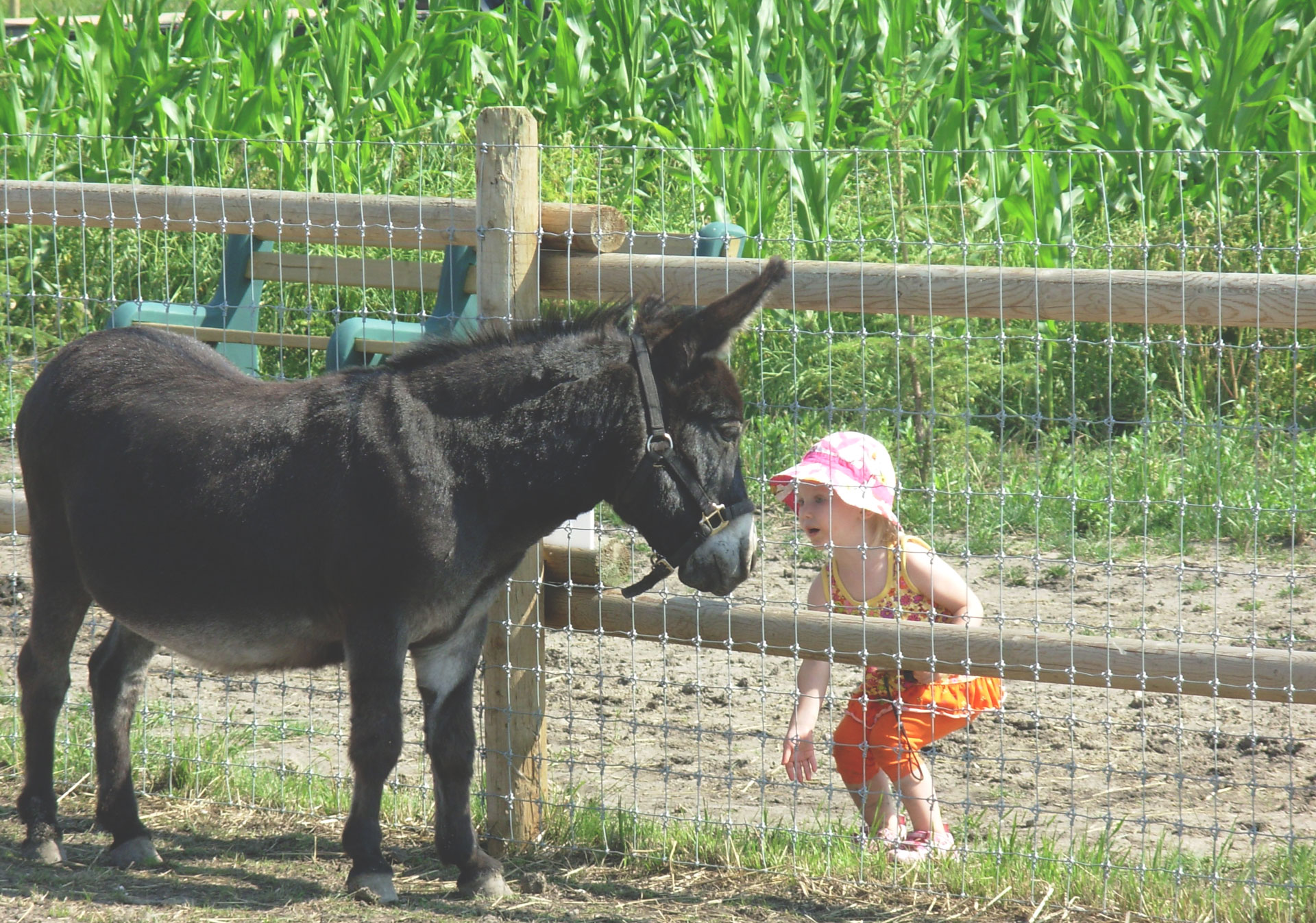 Enjoy a day on the farm with friends and family